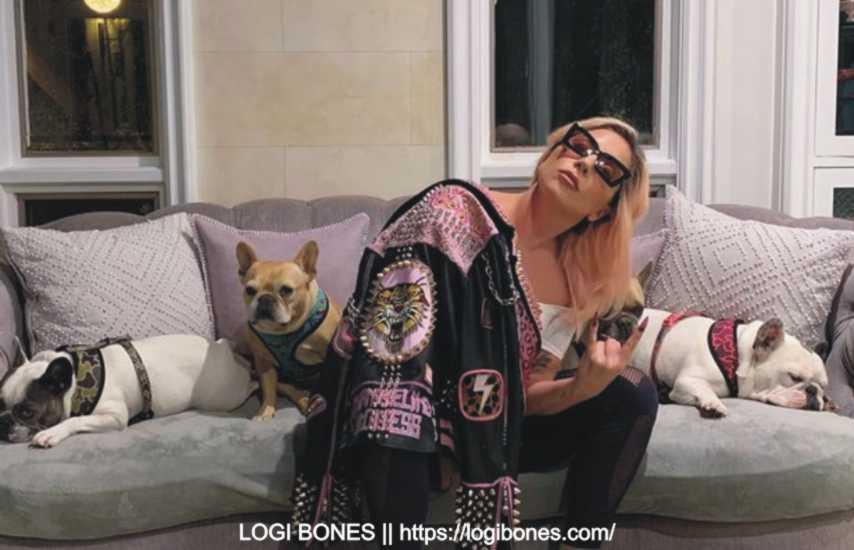 lady gaga dogs 1