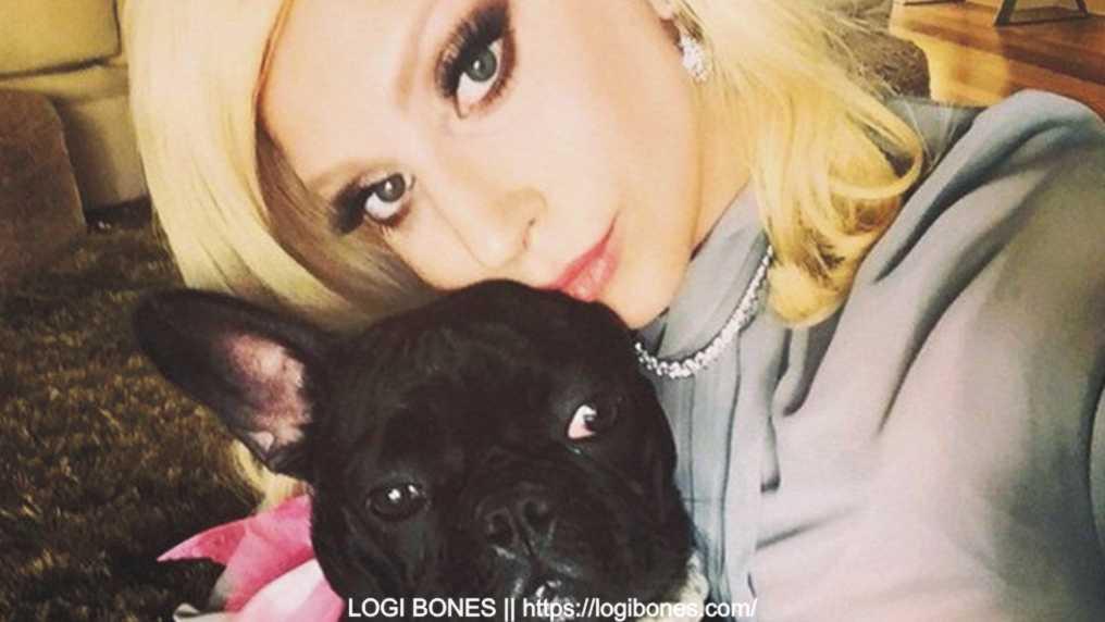 lady gaga dogs 2